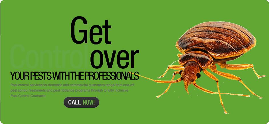 banner-cockroach
