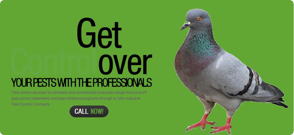 banner-pigeon