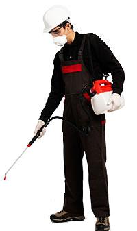 Pest Control Operative